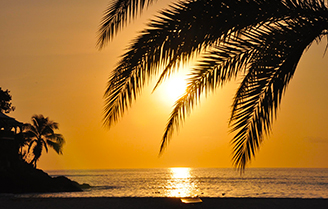 Stunning view of a sunset and palm tree in Antigua